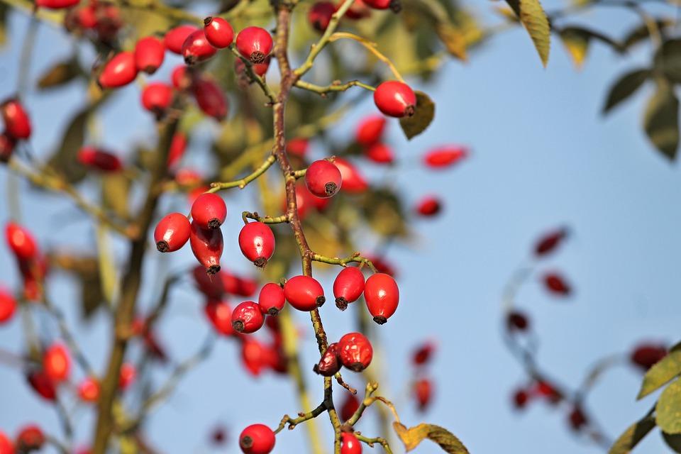 Où cueillir des fruits sauvages sur la Côte d'Azur ?