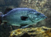 Que pêche-t-on en mer méditerranée cote d'Azur ?