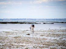 Où pratiquer la pêche à pied sur la Côte d'Azur ?