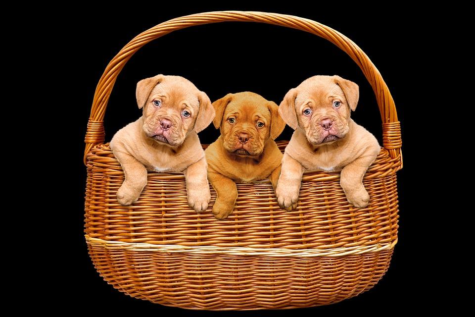 Quel est le panier pour chien idéal ?