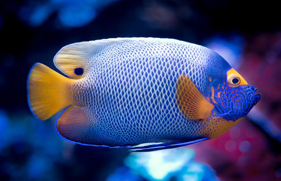 Comment bien nourrir ses poissons avec un distributeur automatique ?